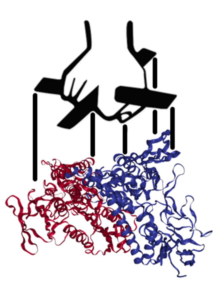 Interacting with proteins